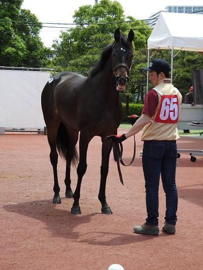 1150万で落札されたリボンアートの牝馬